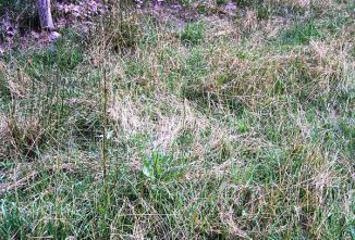 Making Pasture & Forages Work For Sheep