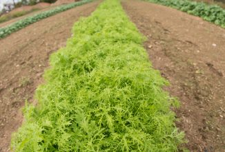 Boost Profits and Prolong Growing Season with Japanese Vegetables