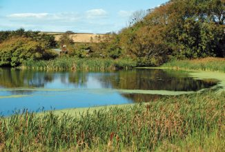 Measuring Your Pond Volume in Gallons
