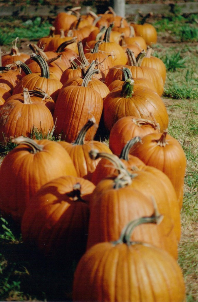 how-to-keep-a-pumpkin-from-rotting