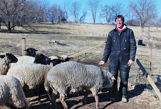 "Profits from a ""Lamb Hub"" — Hi-Ho Sheep Farm"