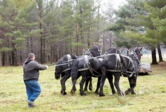 Become a Horse Farmer