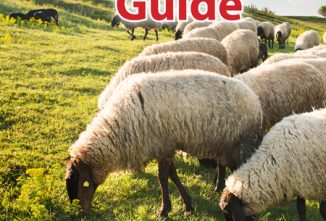 Sheep Farming for Beginners and Beyond