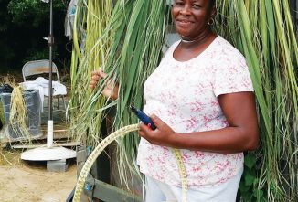 Sweetgrass Holds a Special Place in the Hearts of Charlestonians