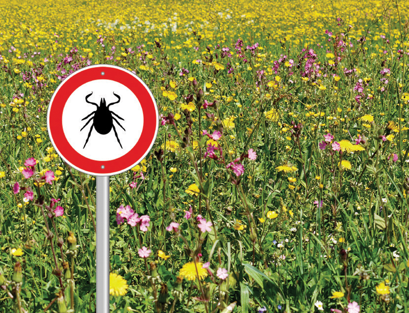 Don't Panic! Recognize and Treat Lyme Disease Symptoms