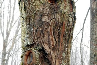 Dealing With Dangerous Trees