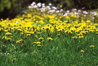 The Benefit of Growing Weeds