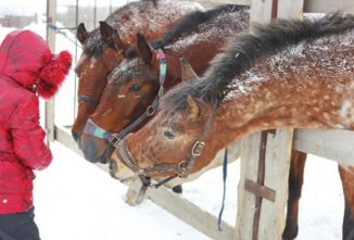 Wintertime Hoof Care For Horses