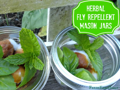 Herbal Mason Jars Are One of The Best Fly Repellant Ideas