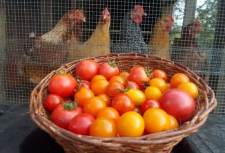 Food Preservation Methods for an Abundant Tomato Harvest