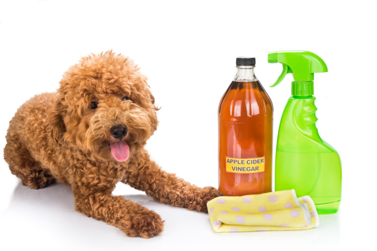3 Natural Home Remedies for Fleas