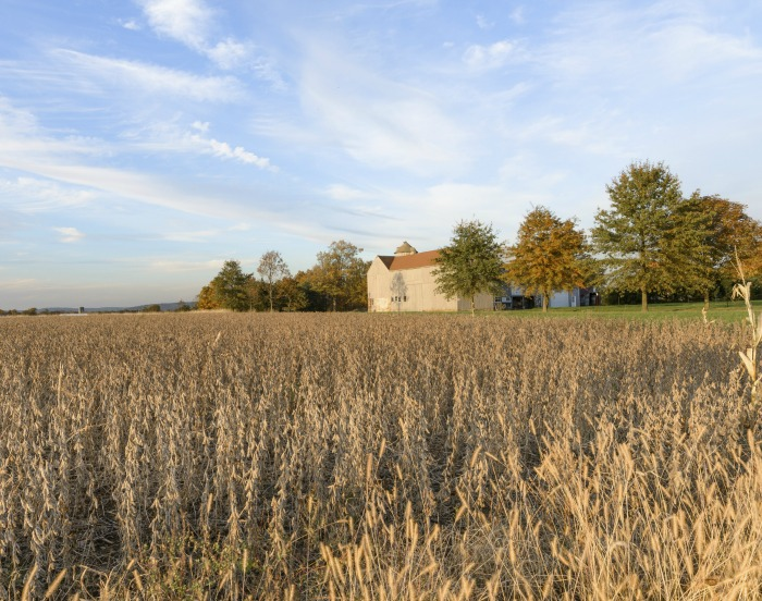 What Does Homesteading Mean To You?