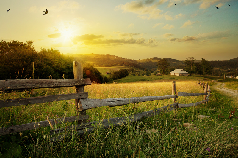 10 Skills for Homesteading Today