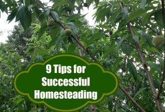 9 Tips For Homesteading Today