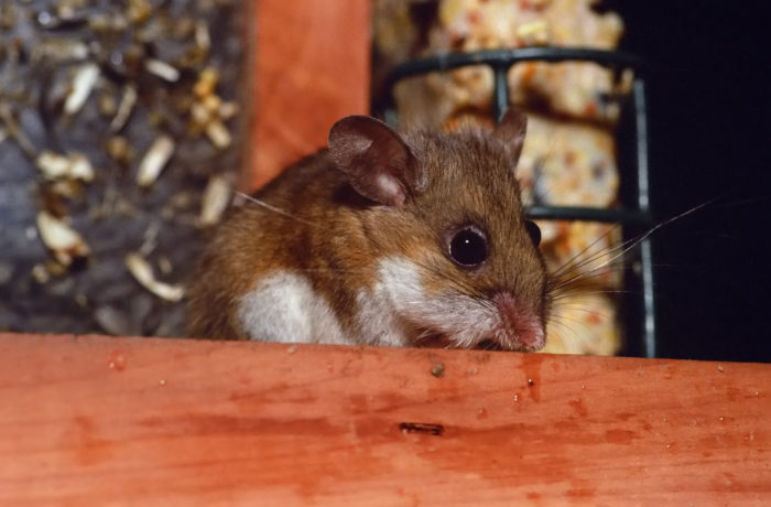 Protecting the Homestead From Hantavirus Pulmonary Syndrome