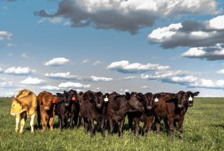Internal Parasites Threaten Herd Performance and Profits