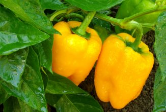 IPM: An Ideal Approach to Natural Pest Control in Gardens and Farms