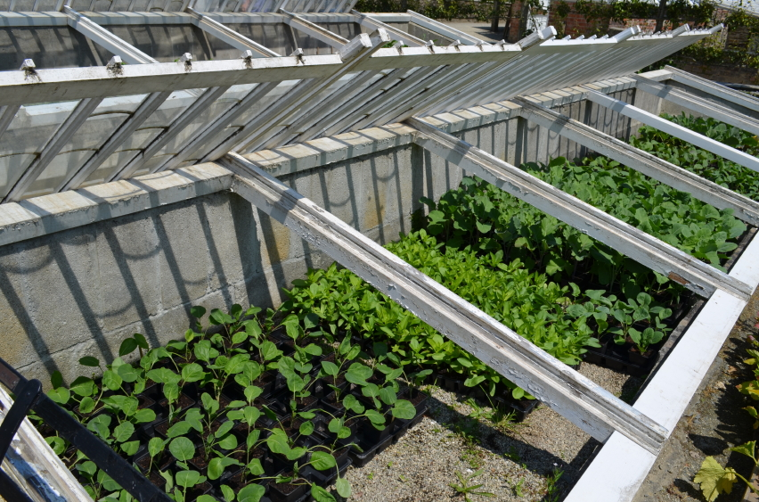 Extend the Growing Season with Cold Frame Gardening