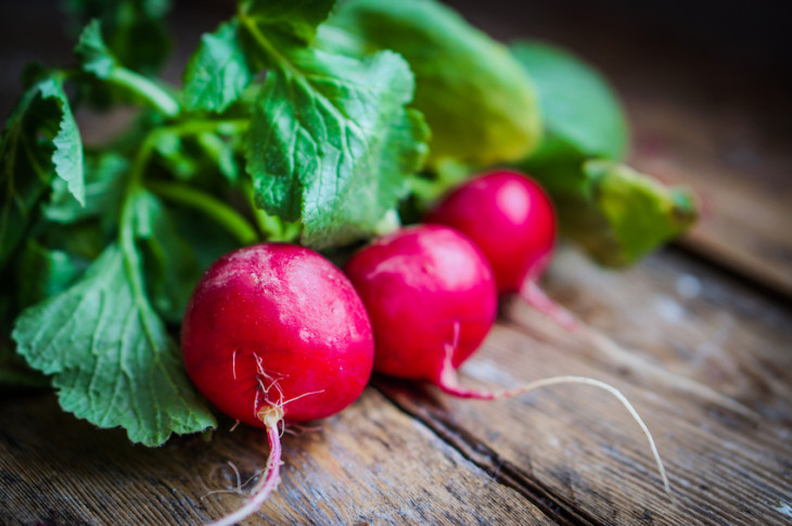 Your Guide to Growing Radishes