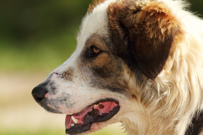Choosing the Best Farm Dogs for Your Farm