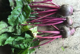 Try My 7 Best Beet Recipes
