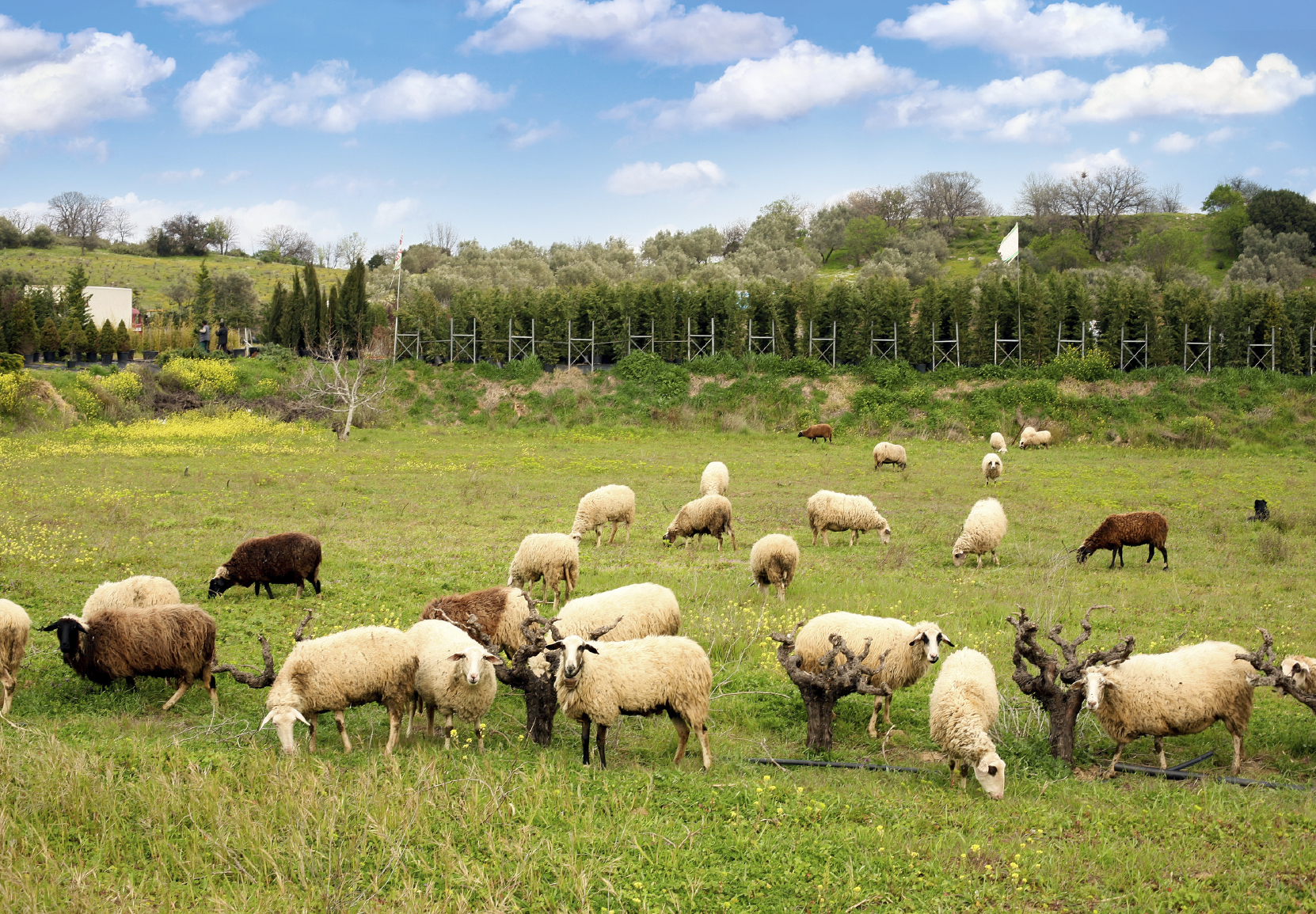 Raise Meat Sheep Breeds To Boost Profits Countryside