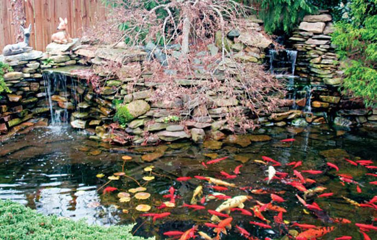 Tips For Farm Pond Design In Your Backyard