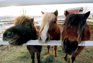 A Second-Chance for Horses