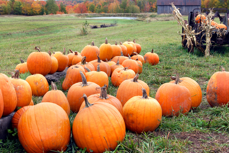 Plant Pumpkins Now For Fall Faces Later