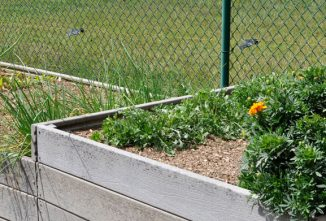 Why Raised Bed Gardening is Better