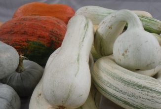 Pumpkins and Winter Squash Varieties