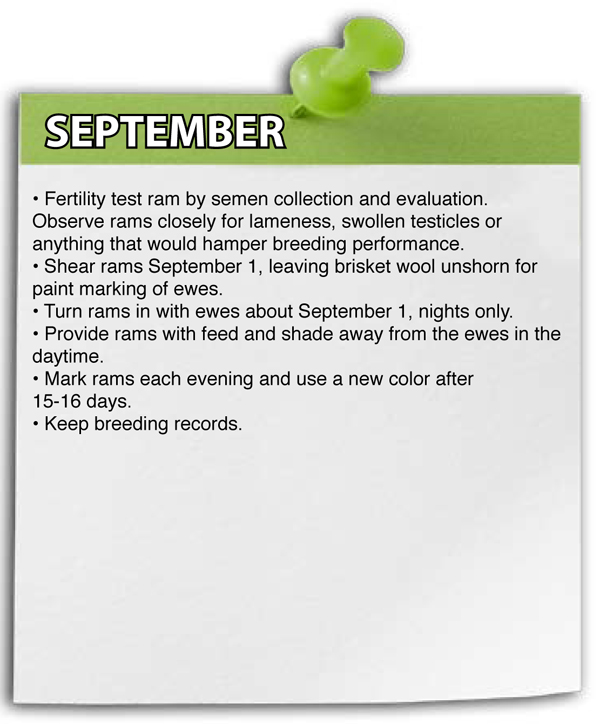 September Shepherd Schedule