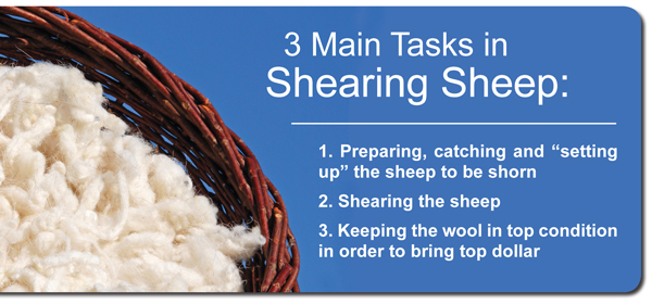Sheep Shearing Tasks
