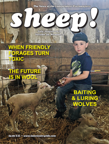 sheep! July/August 2019