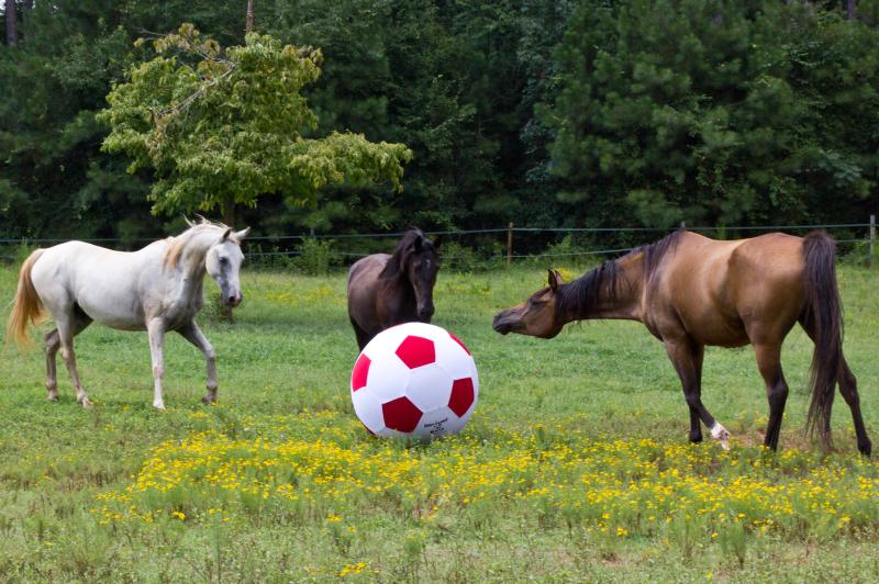 horses-playing-ball