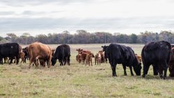 Four Pillars of Herd Health Success