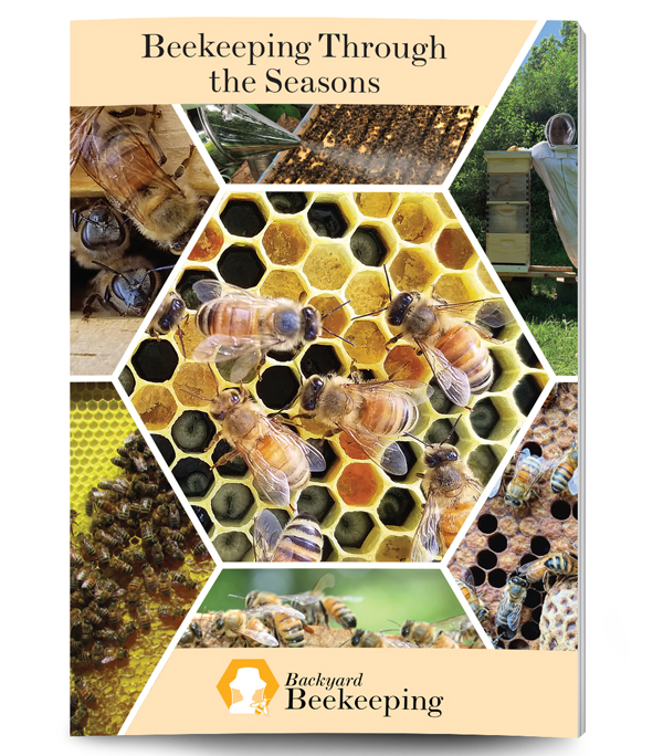 Beekeeping Through The Seasons Guide