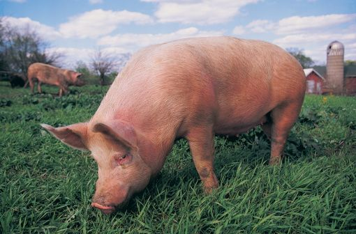 The Importance of Animal Husbandry: New Insights