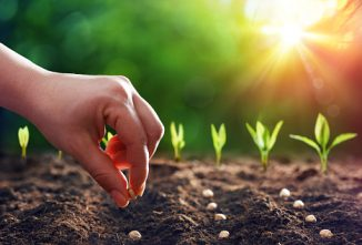 When to Plant Vegetables – Charting for Success all Summer