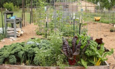 traditional-victory-garden