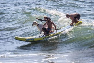 California's Surfing Goats