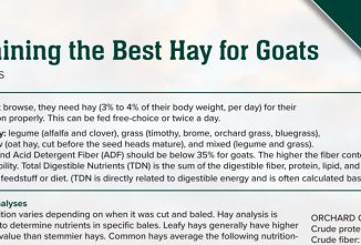 Determining the Best Hay for Goats