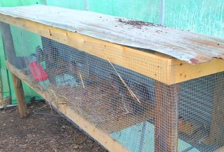 Easy Quail Hutch You Can Build in One Weekend