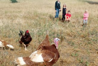 Saving an American Icon — Raising Turkeys