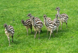 My Experience Raising Emus (They Make Great Pets!)