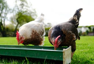 Download our Free Poultry Guides