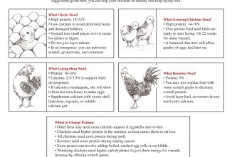 Balance Your Chicken's Diet at All Ages