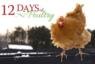 12 Days of Poultry Giveaway