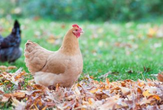 Fall Poultry Giveaway – More Than $1,000 Worth of Prizes!