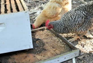 Raising Honey Bees with Pets and Livestock